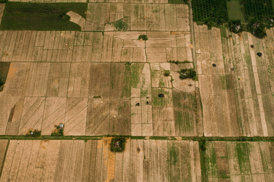 Aerial photo of a ricefield in Libungan, North Cotabato.