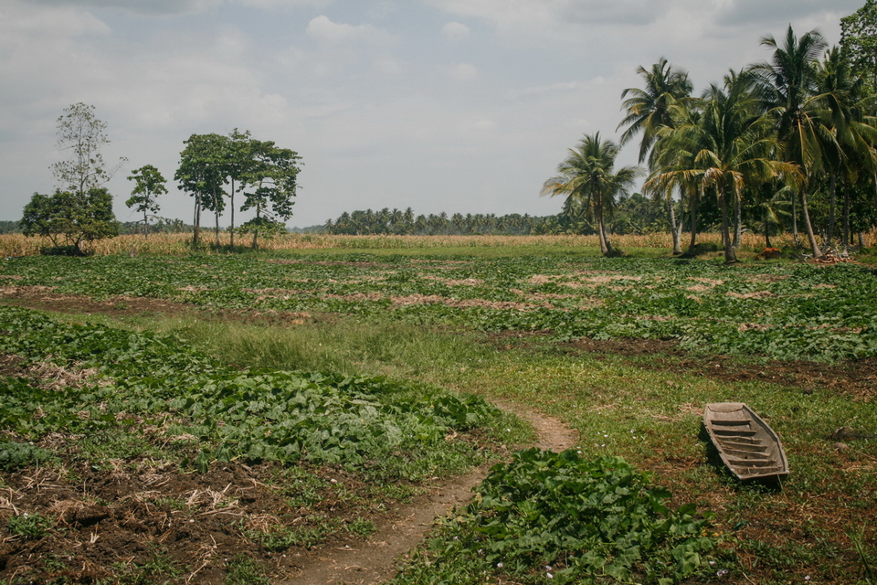 What used to a swampy area had been turned into a watermelon farm in Barangay Bulol, Pikit, North Cotabato.