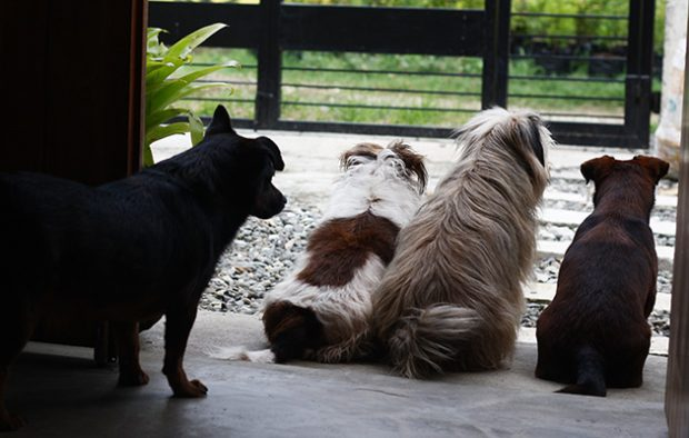 (L-R) Hippo, Sophie, Kimi and Sushii.