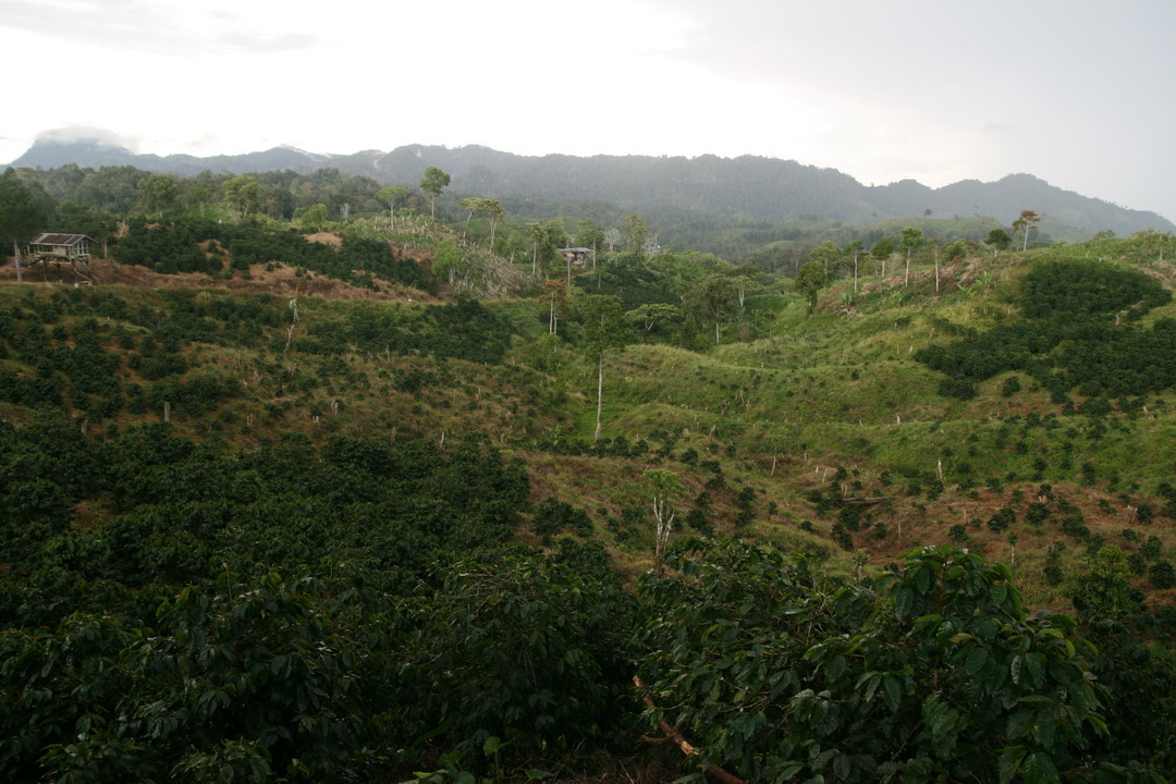 Dawang Coffee Plantation.